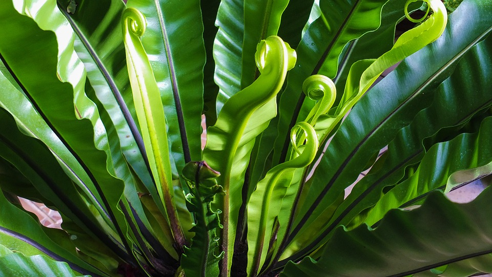 maison-plantes