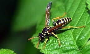 insectes ete